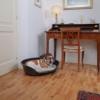 Kép 4/6 - FERPLAST Kutya Fekhely - Ágy Siesta Deluxe 06 70x52x23cm Rózsaszín